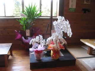IMG_お祝い花.JPG