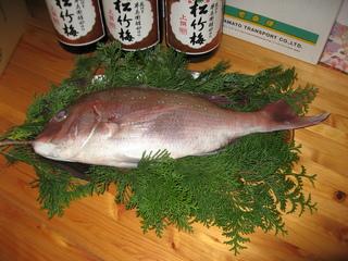 IMG_お祝い鯛.JPG