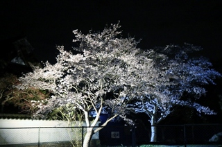 IMG_桜ライトアップ (640x425).jpg